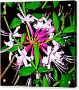 Flora In Pink Acrylic Print
