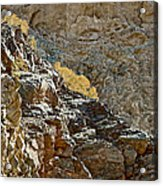 Flora In Sunlight In Big Painted Canyon Trail In Mecca Hills-ca Acrylic Print