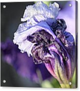 Floral 19 Acrylic Print