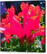 Floral 6 Acrylic Print