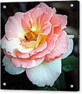 Floral Bee Acrylic Print
