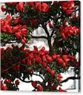 Floral Bonsai Acrylic Print