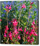Floral Cameo Acrylic Print