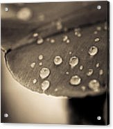 Floral Close-up Iv Acrylic Print by Marco Oliveira