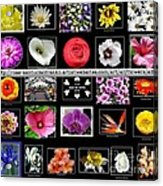 Floral Composite Not For Sale Acrylic Print