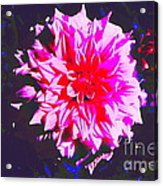 Floral Coral Acrylic Print