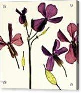 Money Plant Acrylic Print