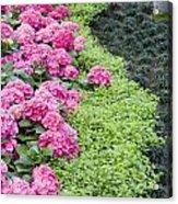 Floral Curves Acrylic Print