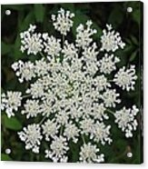 Floral Disc Acrylic Print
