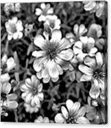 Floral Drama Acrylic Print