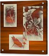 Floral Early Garden Light 01 Acrylic Print