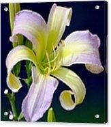 Floral Fanfare Acrylic Print