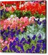 Floral Fantasy Acrylic Print by Dan Sproul