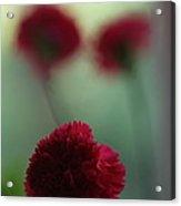 Floral Fata Morgana. Acrylic Print