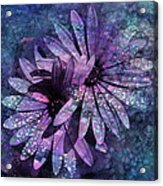 Floral Fiesta - S14c Acrylic Print