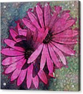 Floral Fiesta  Acrylic Print