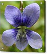 Floral Flight  Acrylic Print