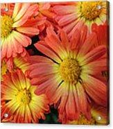 Floral Frenzy 2 Acrylic Print