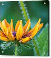 Floral Fuzz Acrylic Print