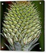 Floral Grenade Acrylic Print