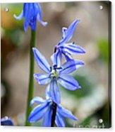 Floral Ladder  Acrylic Print