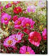 Floral Portulaca Garden Acrylic Print