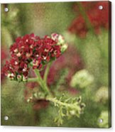 Floral Prose Acrylic Print