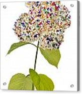 Floral Psychedelic Isolated Acrylic Print