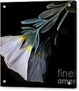 Floral Reflections 3 Acrylic Print