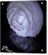 Floral Reflections 4 - Camellia Acrylic Print