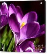 Floral Shadows Acrylic Print