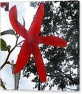 Floral Starfish Acrylic Print