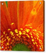 Floral Sunrise - Digital Painting Effect Acrylic Print