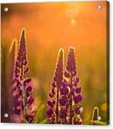 Floral Sunset Acrylic Print