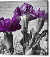 Floral Texture  Acrylic Print
