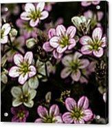 Floral Wallpaper Acrylic Print