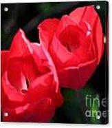 Floral2 Acrylic Print