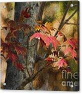 Florida Autumn Leaves Acrylic Print