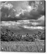 Florida Everglades 0184bw Acrylic Print by Rudy Umans