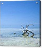 Florida Keys Lonely Root Acrylic Print