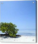 Florida Keys Lonely Tree Acrylic Print