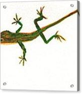 Florida Lizard Acrylic Print