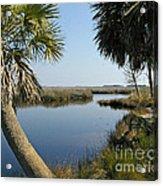 Florida Marshland Acrylic Print