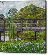 Florida Nature Acrylic Print