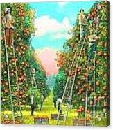Florida Orange Pickers 1920 Acrylic Print by Annette Allman