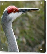 Florida Sandhill Crane Acrylic Print