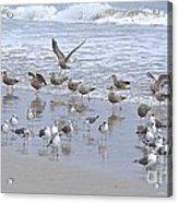 Florida Seabirds Acrylic Print