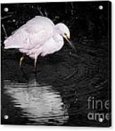Florida Snow In Black And White Acrylic Print