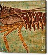 Florida Spiny Lobster Acrylic Print