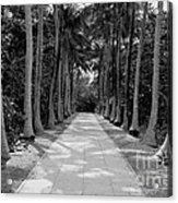 Florida Walkway Black And White Acrylic Print